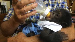 """Pedimos a AIZA que tome medidas por la utilización de una cría de chimpancé para """"selfies"""""""