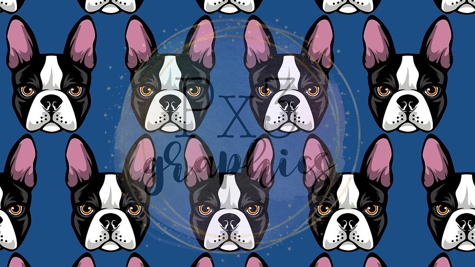 Boston Terrier - blue