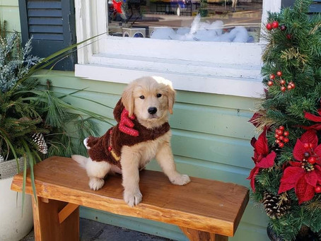 So you want a puppy for Christmas...