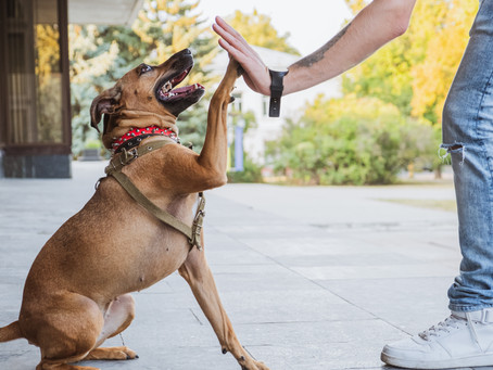 Building Confidence in Dogs