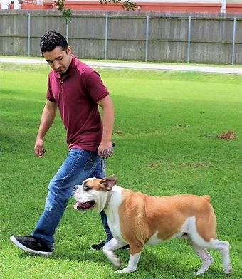 Dog Loose Leash Walking