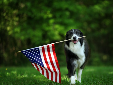 Celebrating July 4th with Love for our Dogs