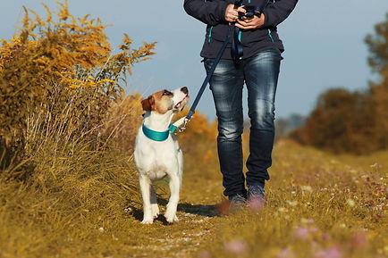 Sportive woman walks her dog on a leash