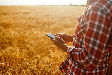 Hands using phone on farm land