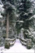 Screen Shot 2020-01-10 at 1.27.49 PM.png