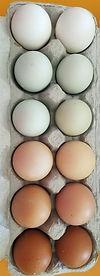 Eggs_edited_edited.jpg