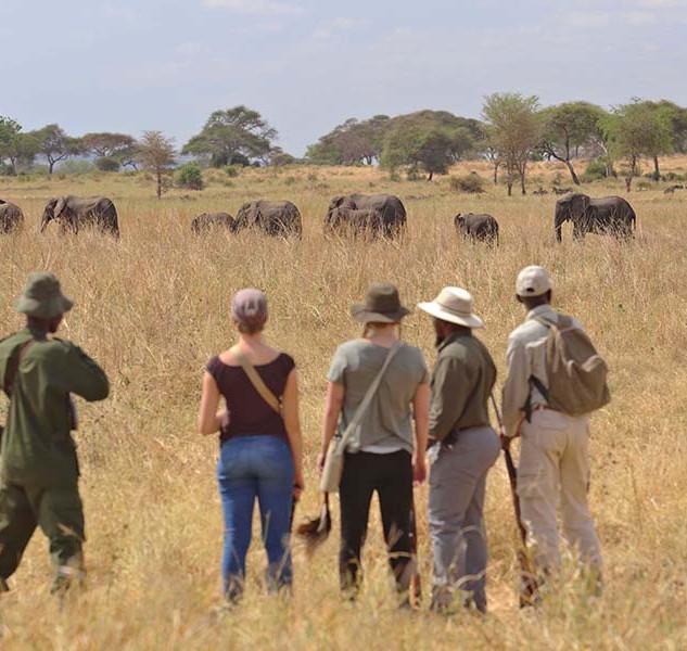 Walking Safari Tarangire