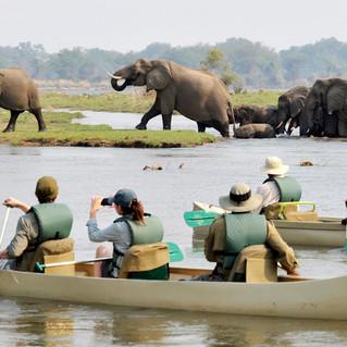 Canoe Safari Lower Zambezi