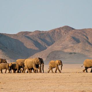 Namibia Ultimate Safari