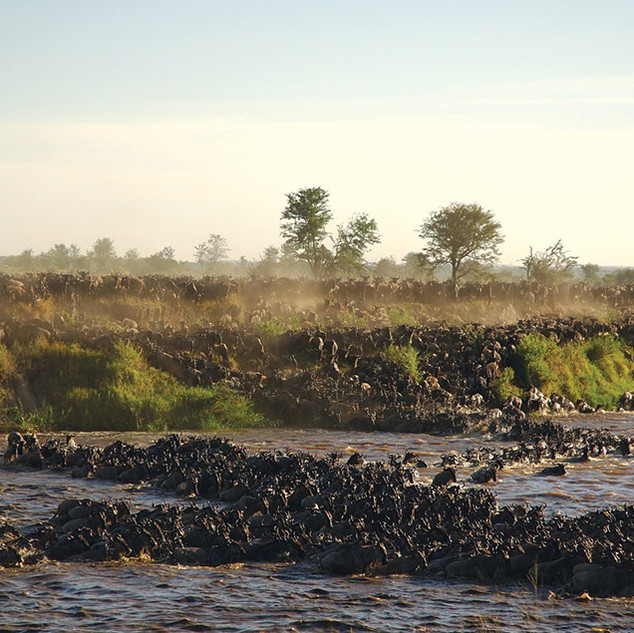 Sayari Serengeti Migration Crossing