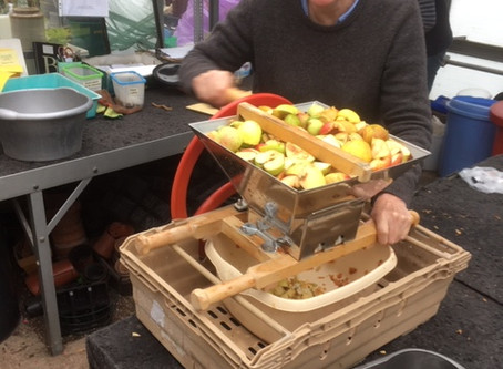 Making apple vinegar and juice today