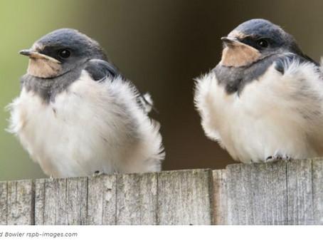 How has wildlife helped you endure lockdown?