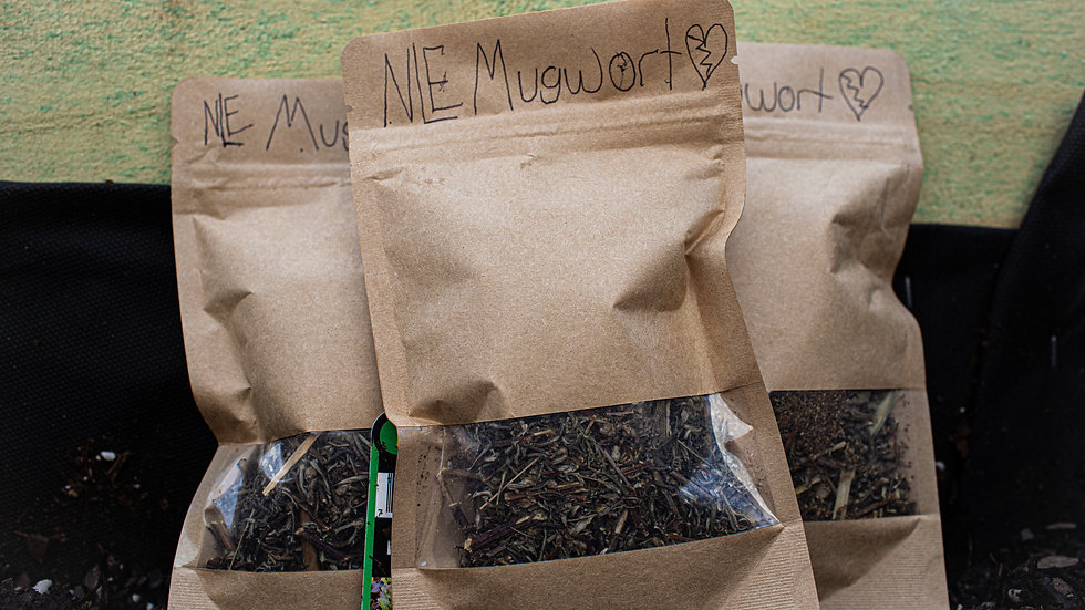 NLE Mugwort (Touched/Signed By NLE Choppa)