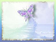 01-gi-transformation-papillon-1.jpg