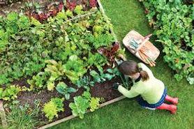 voedseltuinen.jpeg