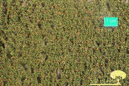 Small Beech Foliage Early Autumn