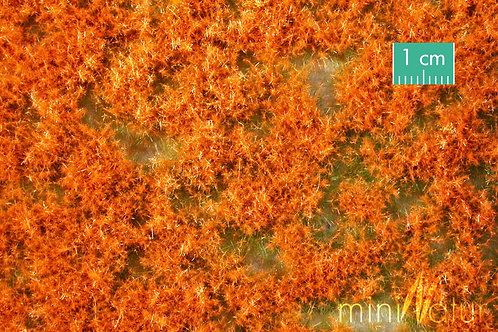 Coloured Groundcover, Orange