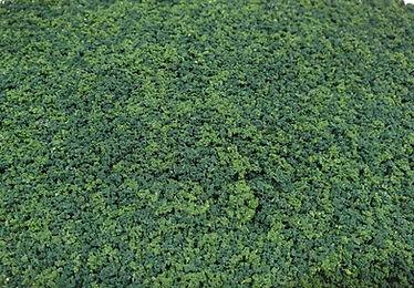 Forest Green Foliage.jpg