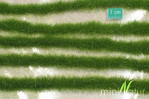 Long Grass Strips Summer