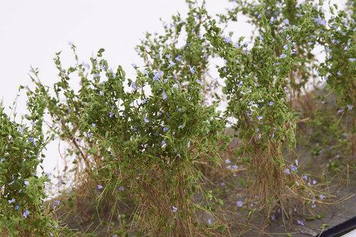 Bushes type B lavender Martin Welberg