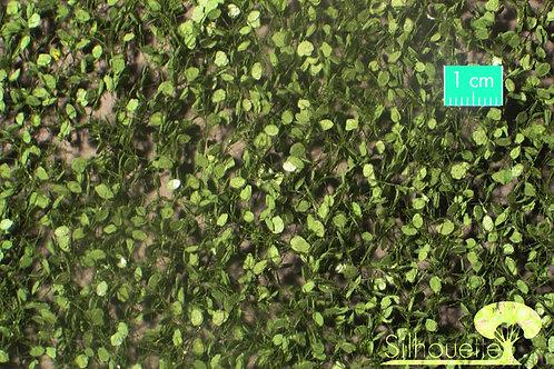 Large Beech Foliage Summer