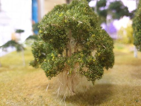 Moreton Bay Fig Tree 90mm-135mm