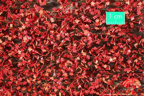 Maple Foliage Late Autumn Red