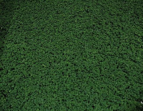 Foliage Dark Green Ground Up Scenery