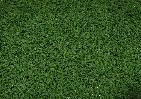 Foliage Medium Green Ground Up Scenery