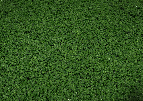 Foliage Medium Green