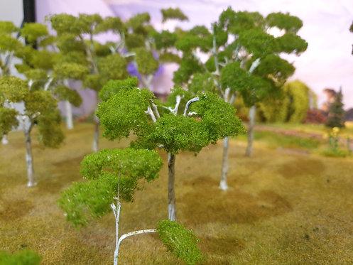 Gum Tree Green 40mm - 150mm