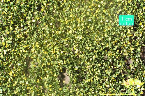Large Lombardy Poplar Foliage Early Autumn