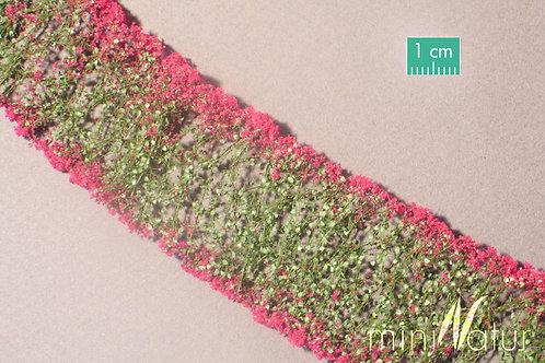 Flowers, Magenta