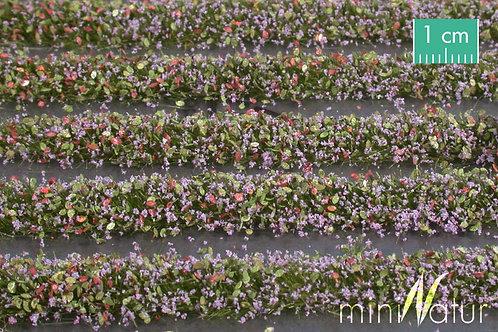 Blossom Strips, violet