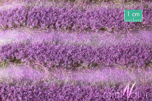 Large Lavender Field Strips