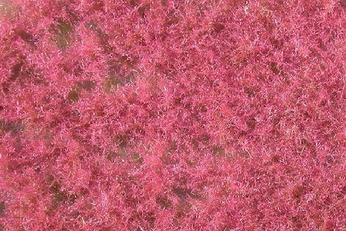 Coloured Groundcover, Pink