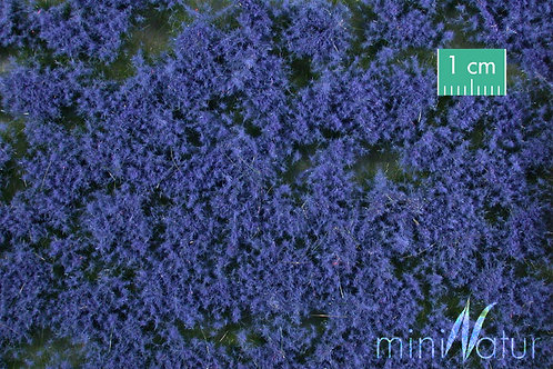 Coloured Groundcover, Blue