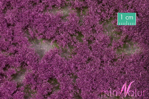 Coloured Groundcover, Violet