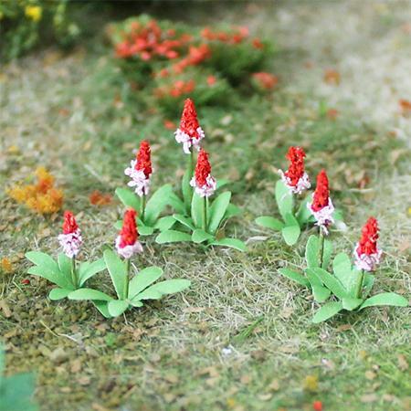 """Primula Vialii 1/2"""", 32/pk MP Scenery"""