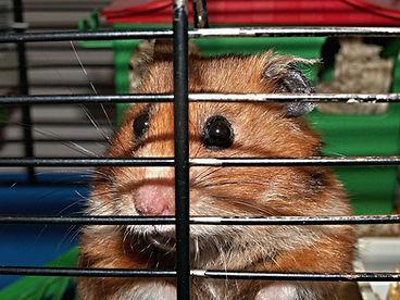 hamster-113069_1280.jpg