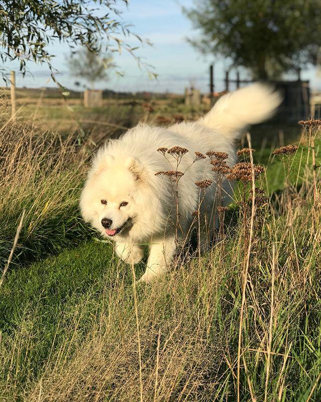 Ivita, ze wandelt elke dag langs het pad