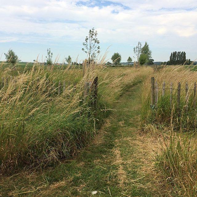 Het weggetje doorheen het lange gras