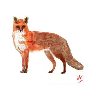 Fuchs