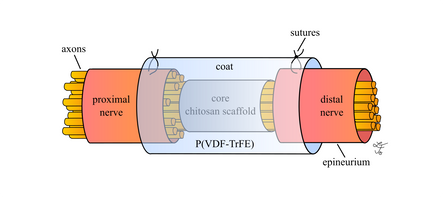 Abbildungen für meine Masterarbeit  In vitro analysis of a potential piezoelectric effect of electrospun meshes on Schwann cell morphology and neurite outgrowth, 2015