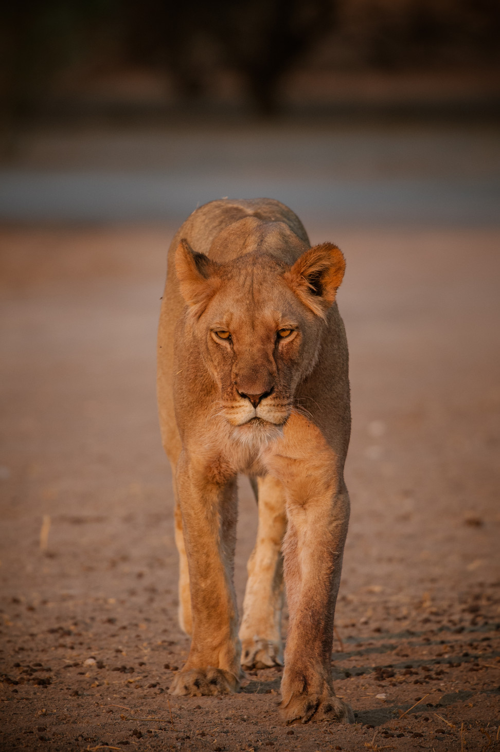 LIONS - 74.jpg