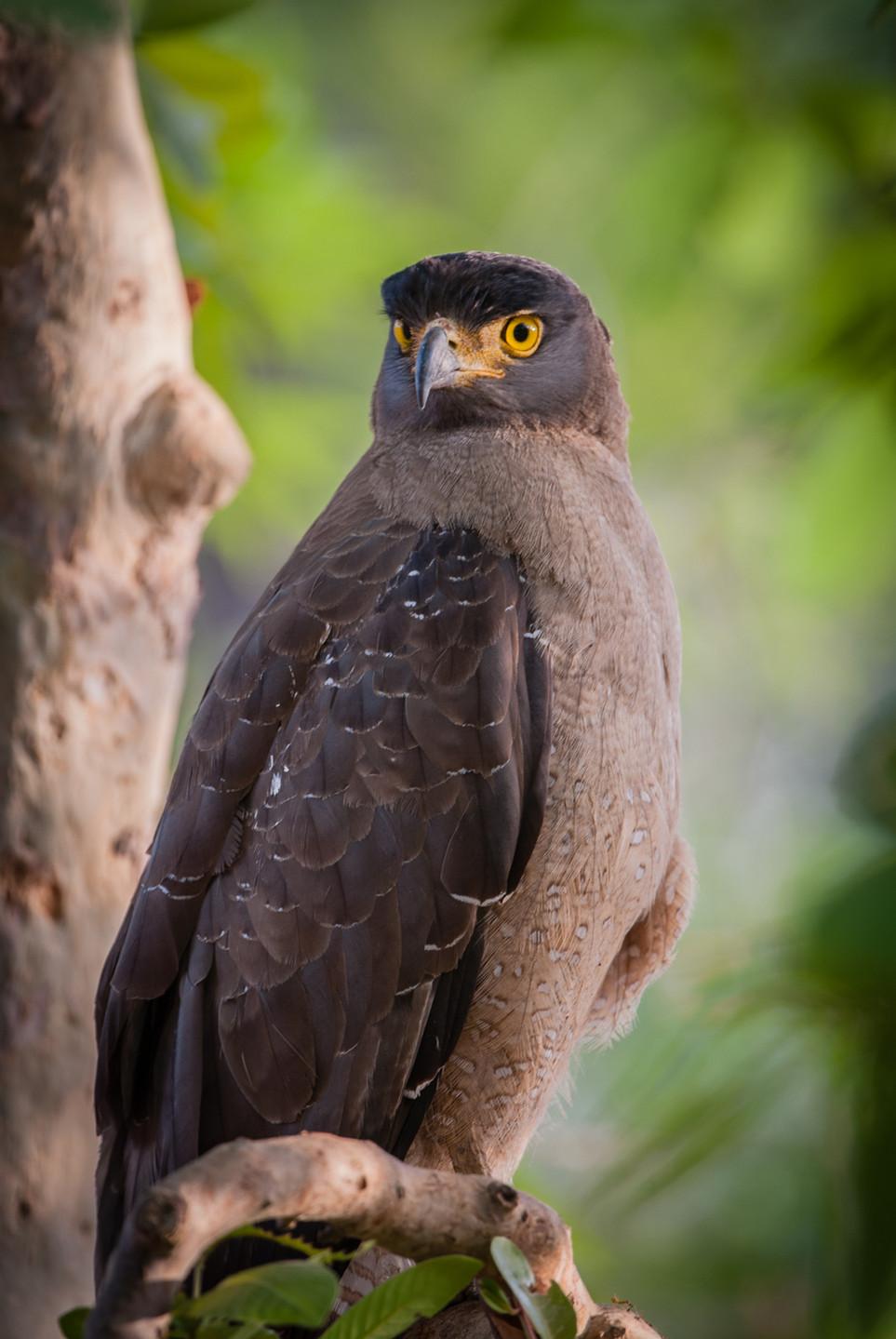 BIRDS - 09.jpg