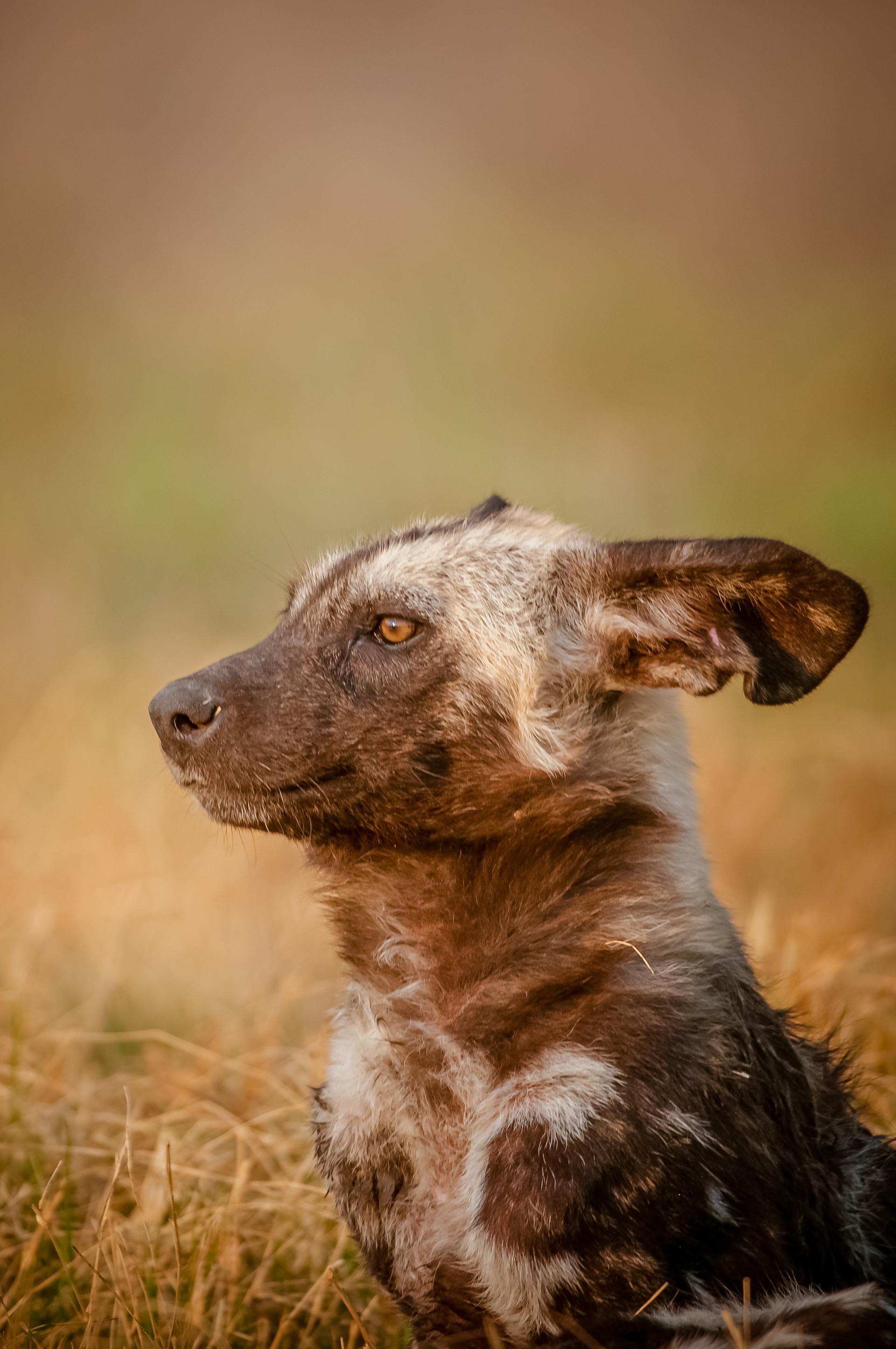 WILD DOGS - 12.jpg
