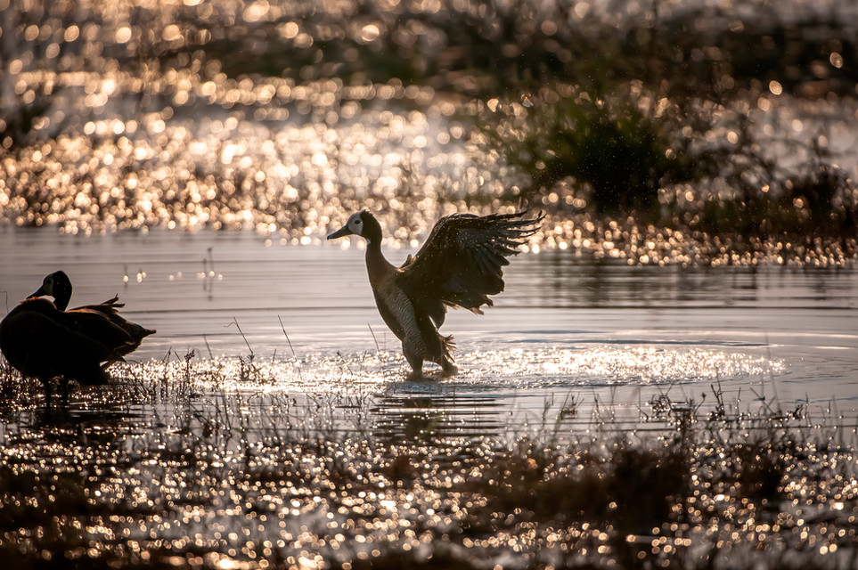 BIRDS - 22.jpg