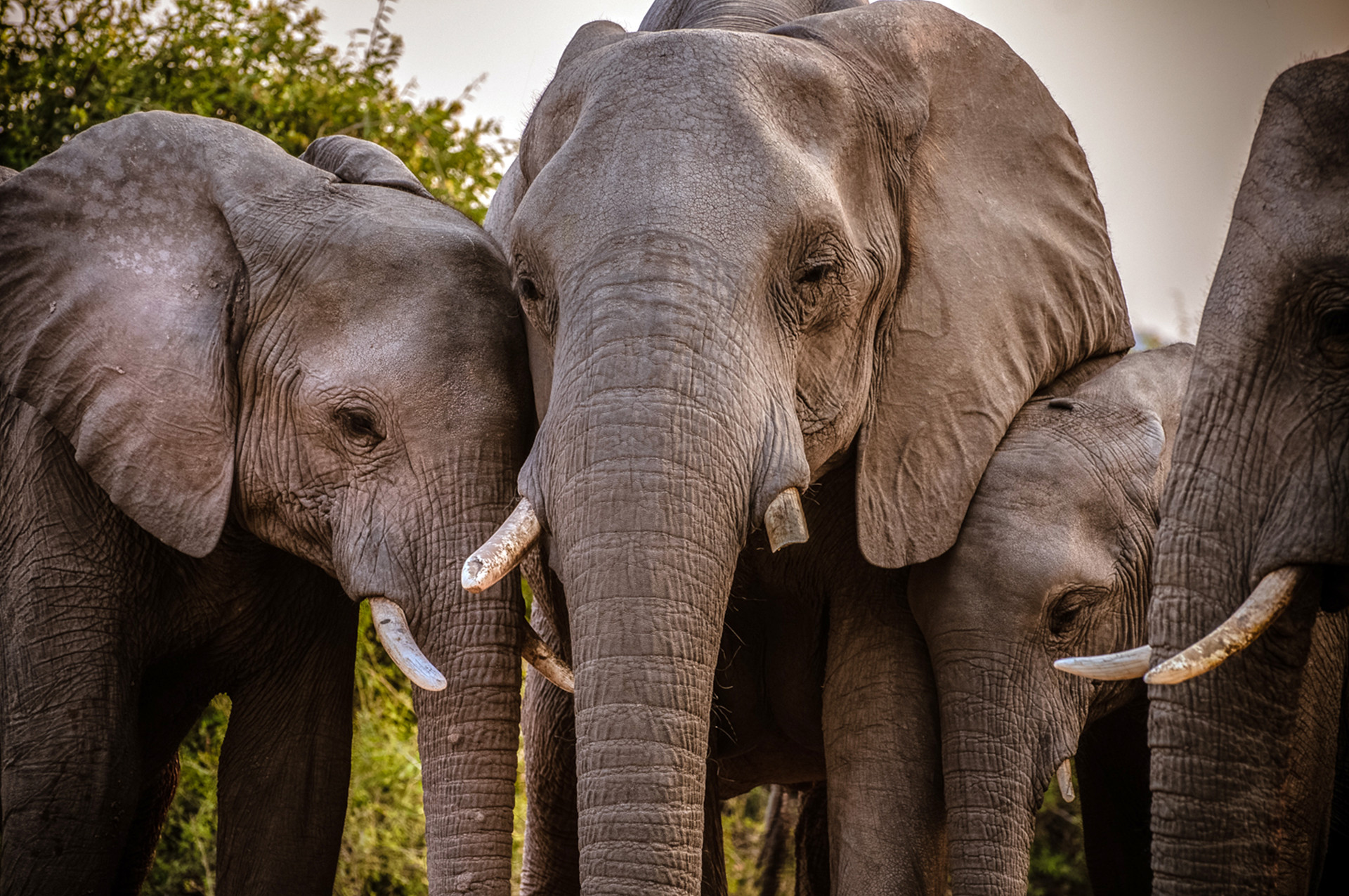 ELEPPHANTS - 20.jpg