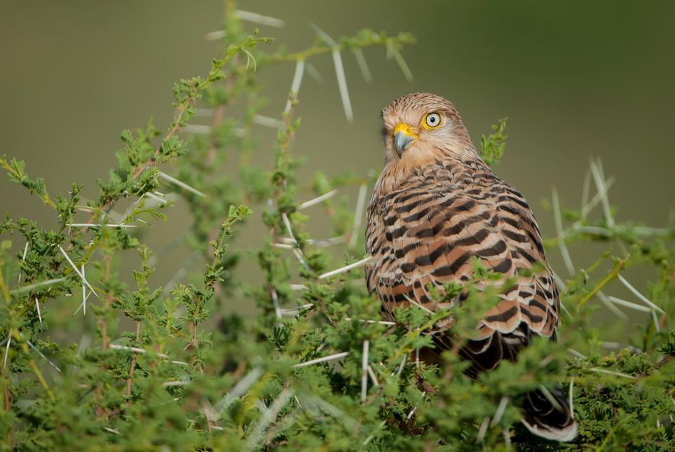 BIRDS - 10.jpg